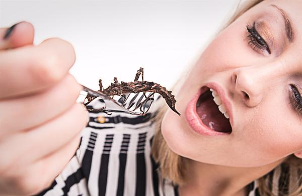 Insects are low in fat  and rich in nutrients / shutterstock.com