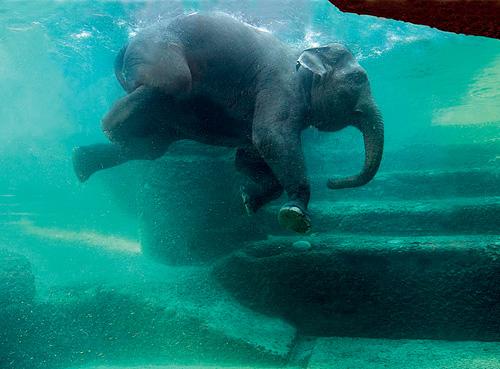 Zurich Zoo's elephant 'aquarium'