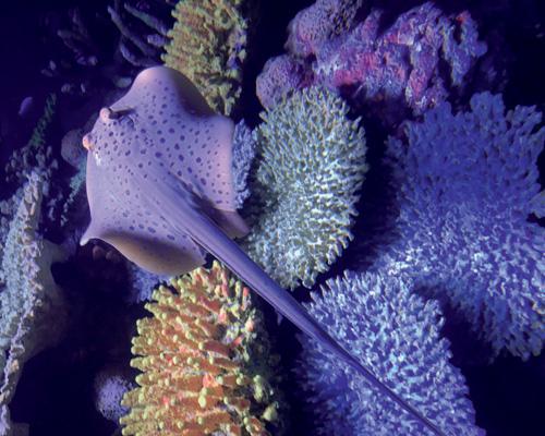Good Reef!