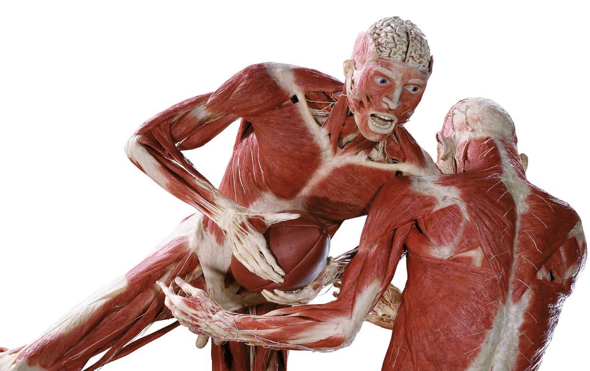 Human Body Organs Real