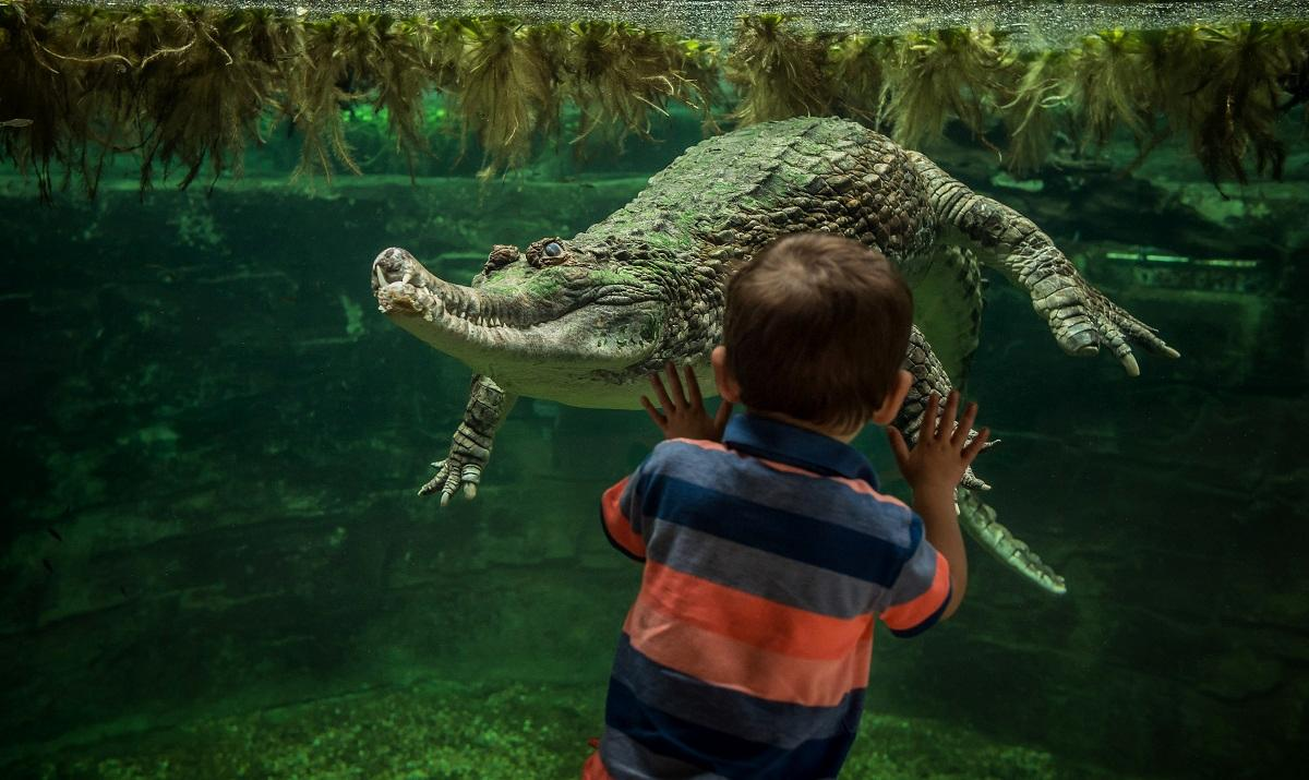 Monsoon Forest is home to two Sunda gharial crocodiles / Chester Zoo