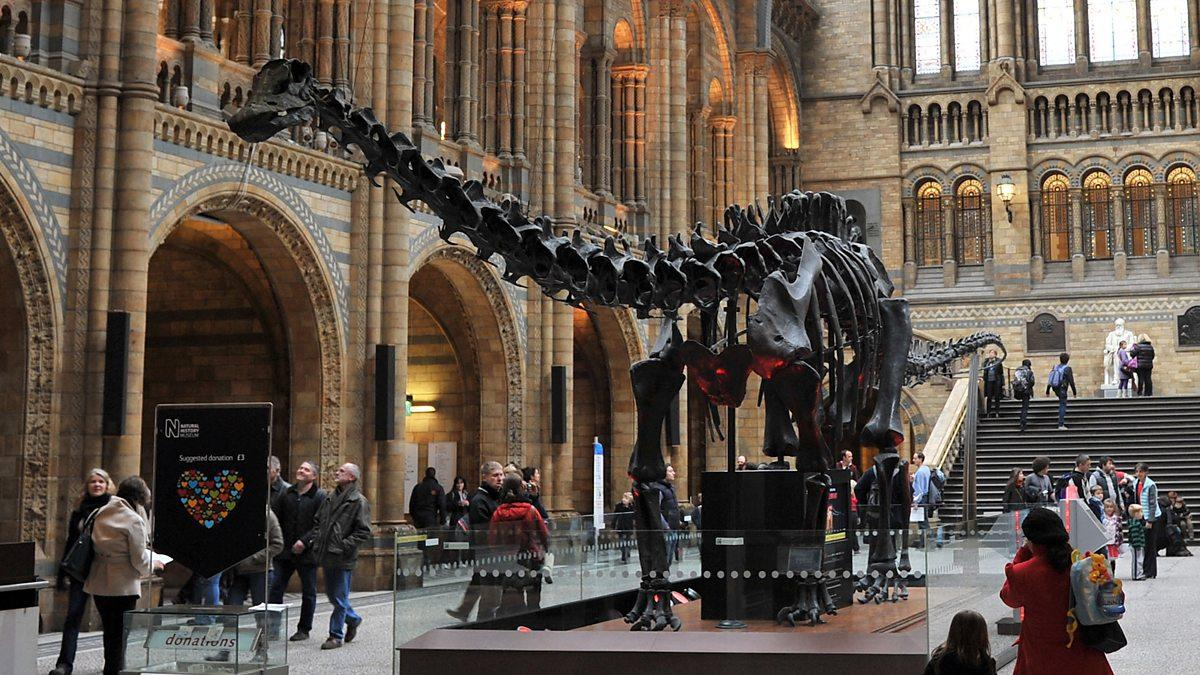 Dippy has been a part of the museum's collection for more than a century