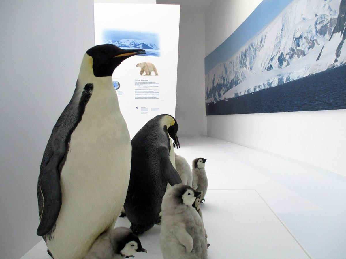 Penguins and polar bears are among the animals explained at the museum / Espace des Mondes Polaires