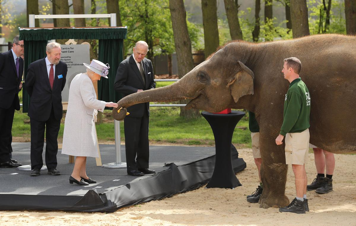 pictures The Queen Helps Feed Elephants at Whipsnade Zoo