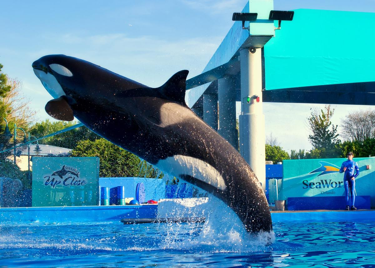 Attractions Management News: 'One brand worldwide ...