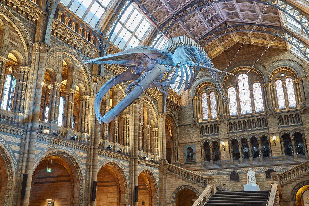 'Hope' the blue whale replaced 'Dippy' the diplodocus / NHM