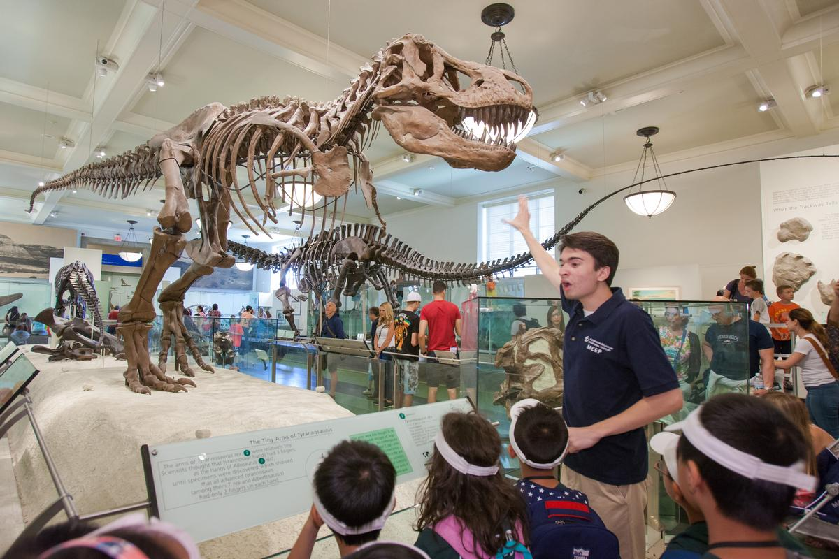 Trainees design and conduct creative tours for the more than 500 camp groups that visit through the summer / AMNH