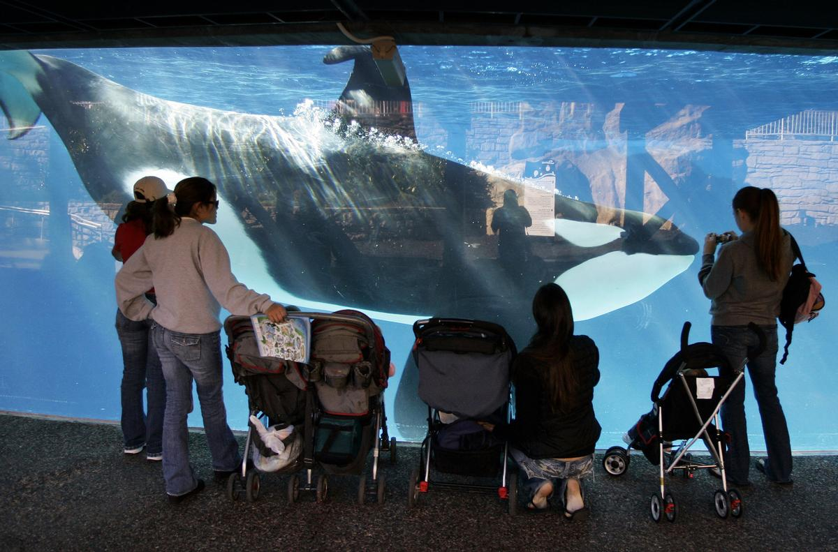 SeaWorld's Chinese ventures have already been confirmed not to have orcas, along with any other future parks it develops