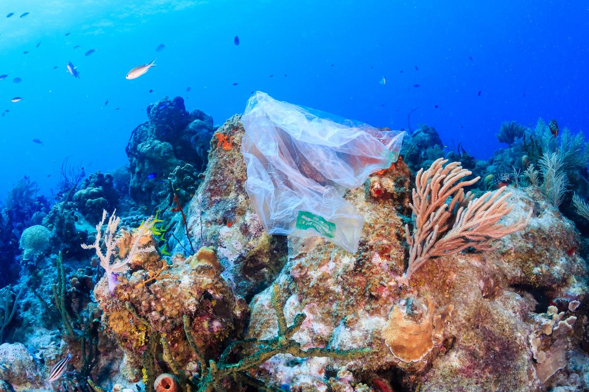The MoU will focus on marine plastic pollution, protecting coral reefs and reducing demand for wildlife products worldwide / Shutterstock.com
