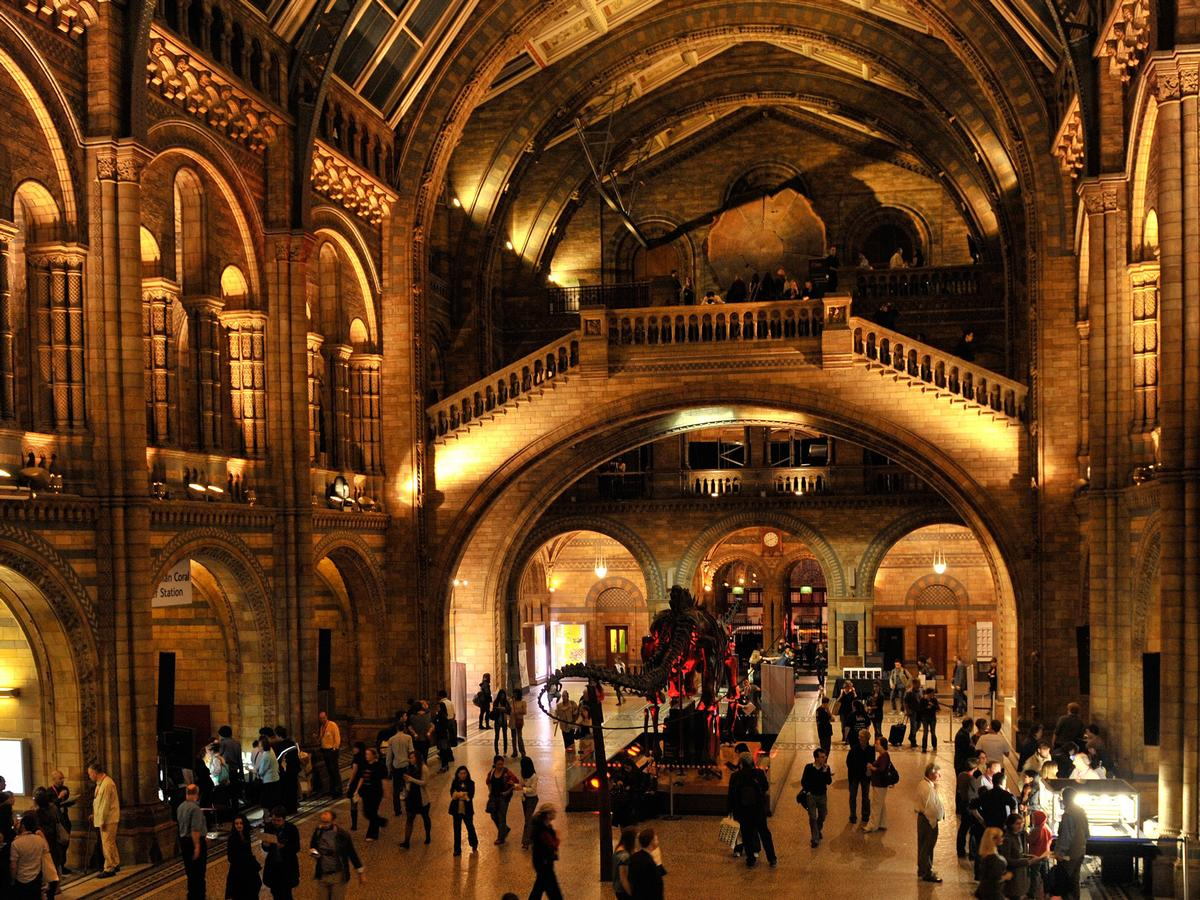 Late night museum social events are becoming more popular / NHM