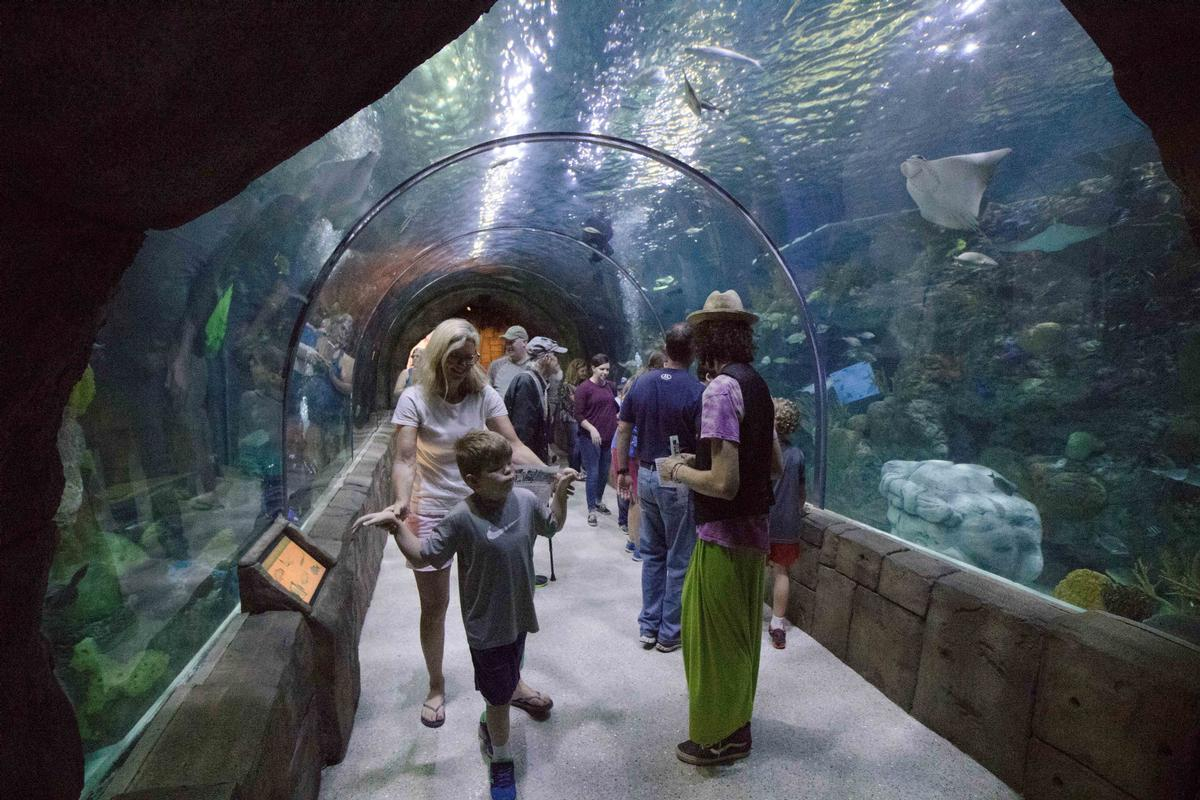 Under the Institute's umbrella, the certification has been awarded to the Aquarium of the Americas, as well as the Audubon Zoo, and the Audubon Butterfly Garden and Insectarium