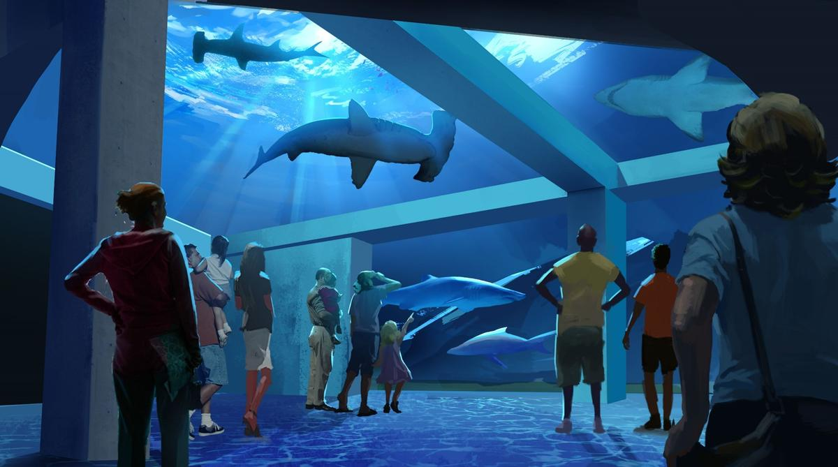 "In a new release, aquarium president and CEO, Joesph Handy, said the new development would spotlight ""the awe-inspiring species of shark"""