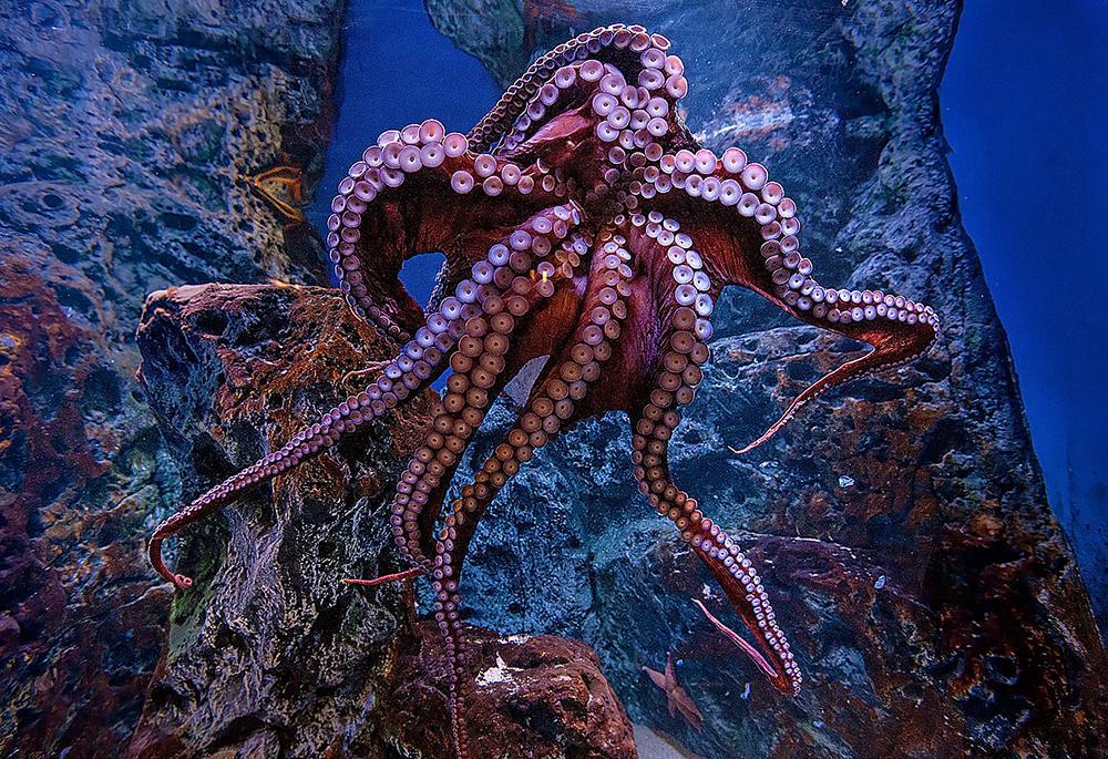 The aquarium features 20,000 sea animals and 450 species