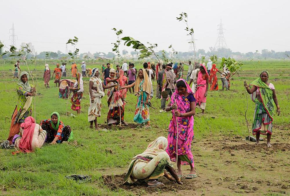What can you do to add trees to environments you control? / AP Photo/Rajesh Kumar Singh