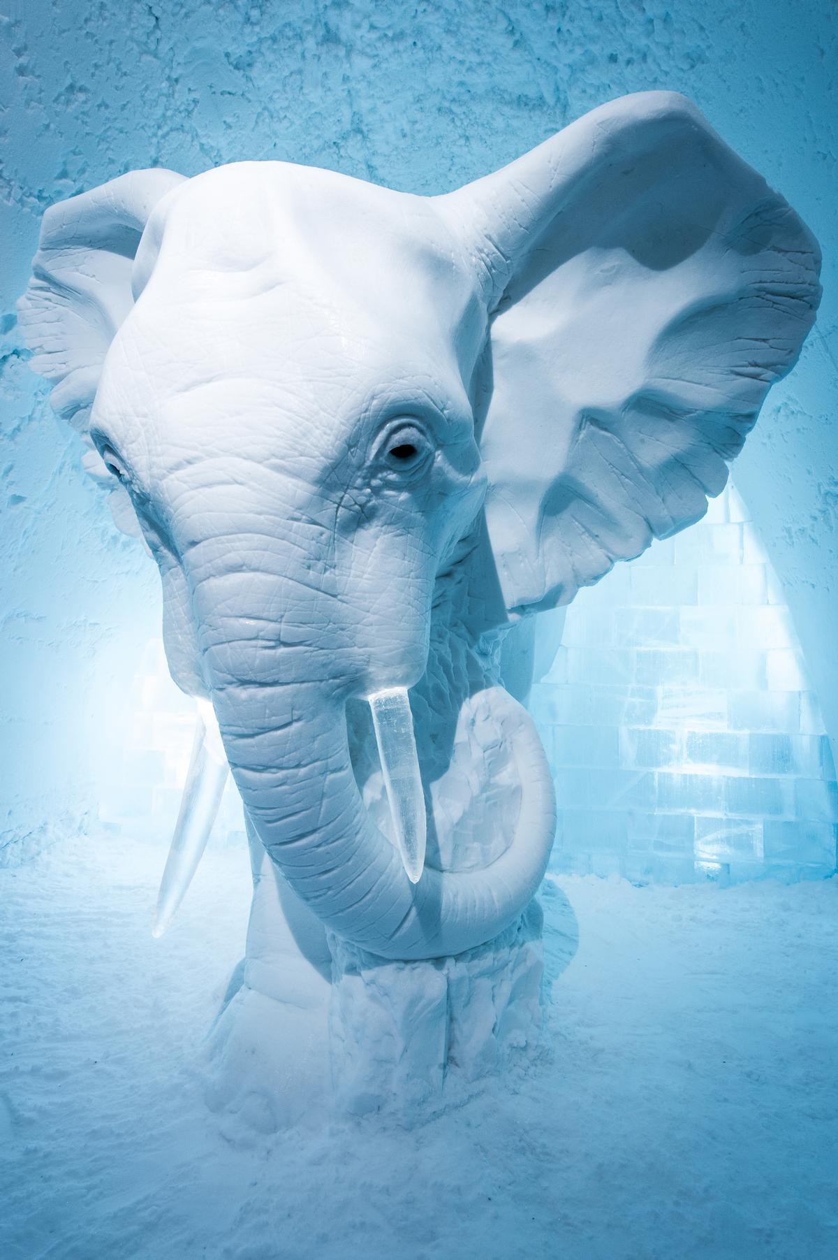 Elephant in the Room by AnnaSofia Mååg / Asaf Kliger