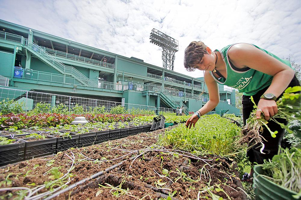 Fenway Park, Boston, Massachusetts: The home of the Red Sox has a rooftop garden that grows vegetables and herbs for the stadium's restaurants