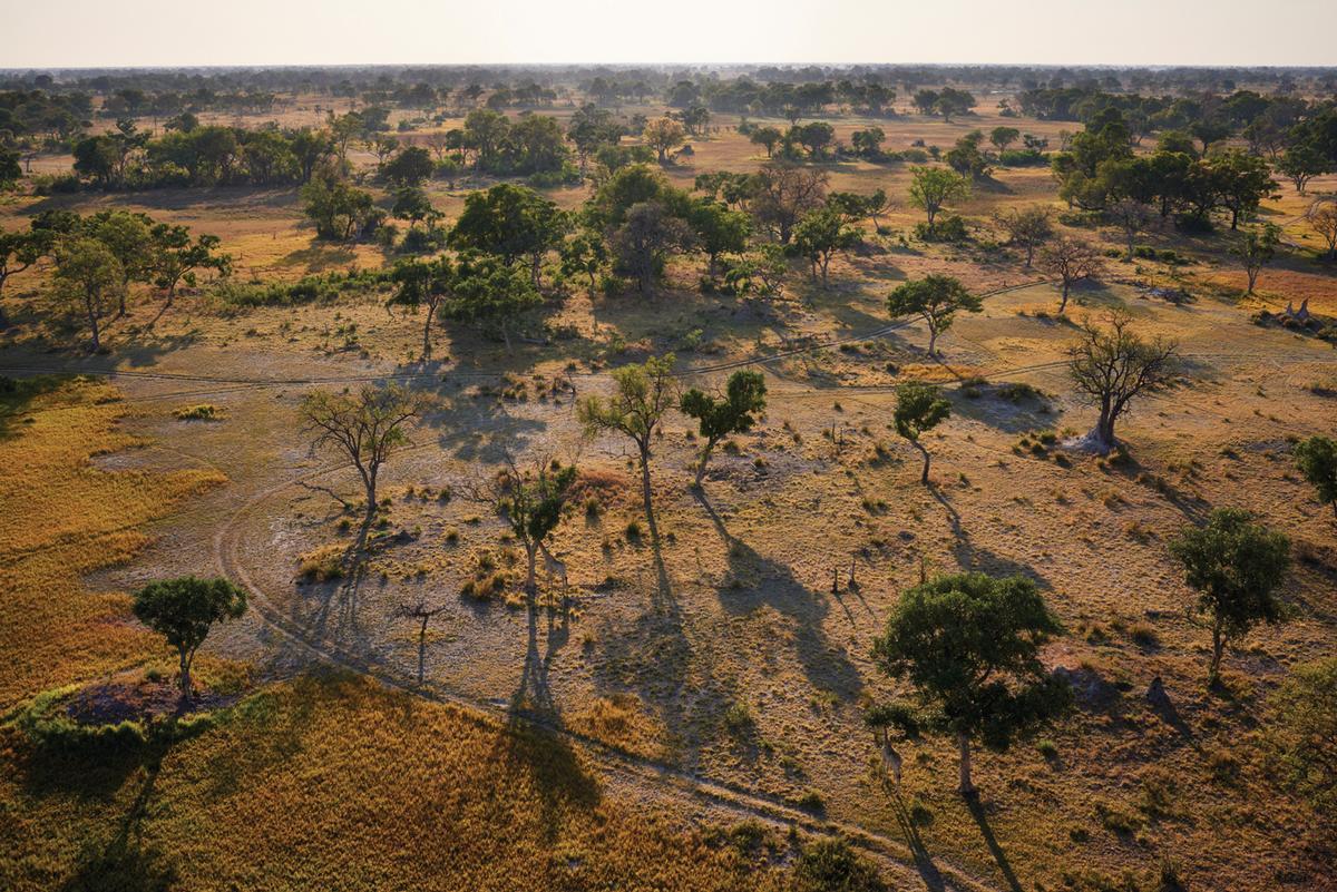 The resort is inspired by its home - the diverse Okavango Delta / Belmond Eagle Island Lodge Botswana