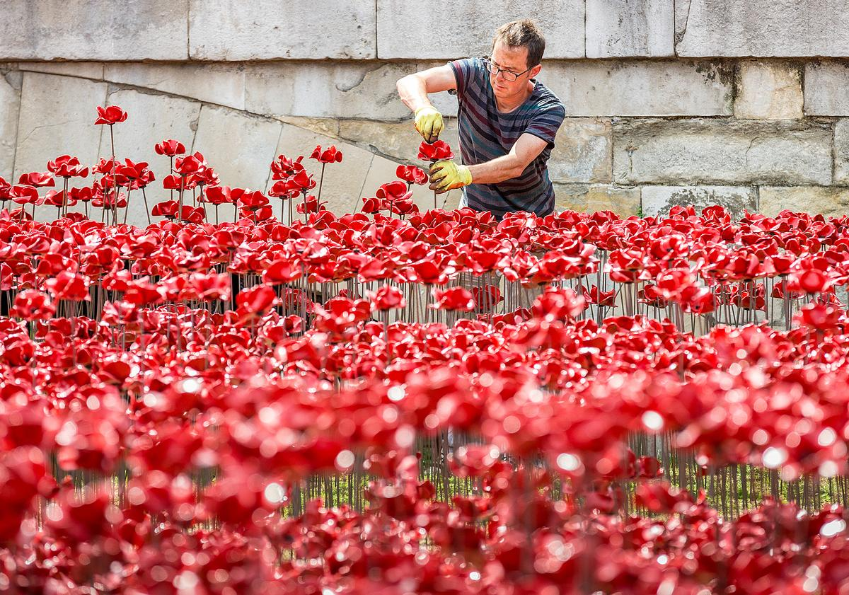 Blood-Swept Lands and Seas of Red saw 888,246 hand-made poppies planted at the Tower of London / RLeaHairHRP