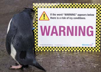 Penguins pick up on ice warning signs