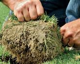 Hybrid turf