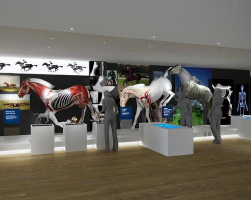 The central exhibit is of a life-size horse that uses projection mapping to identify the bone structure, muscle groupings and anatomy of a thoroughbred horse / Mather