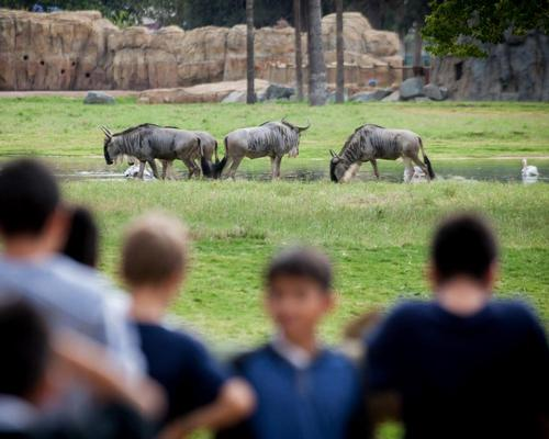 Since African Adventure opened, the zoo has experienced a 40 per cent upswing in attendance / Fresno Chaffee Zoo
