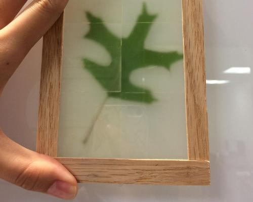 The unorthodox window-making process starts with bleaching wood of its lignin – the component that makes it both brown and strong / University of Maryland Energy Research Center