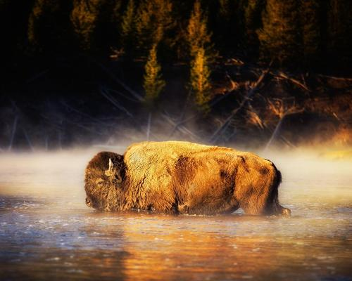 Buffalos, history and a national park: Blu Spas working on 'first of its kind' Yellowstone hot springs project