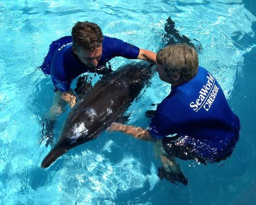 The park will also include the UAE's first dedicated marine life research, rescue, rehabilitation and return centre