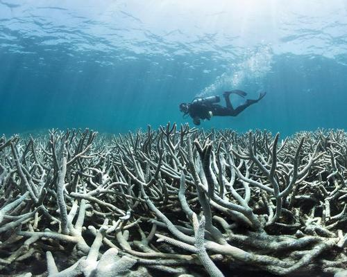 Coral bleaching is killing swathes of the Great Barrier Reef / XL Catlin Seaview