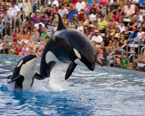 SeaWorld reveals government subpoena requests