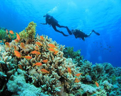 The world's coral reefs are worth an estimated US$1tn in social, cultural and economic value / Shutterstock.com