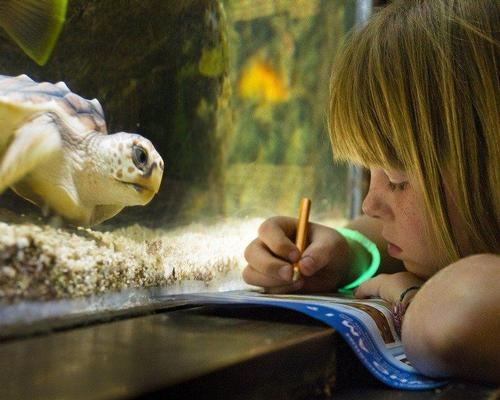 A guest takes part in a scavenger hunt at the National Aquarium, Baltimore, Maryland