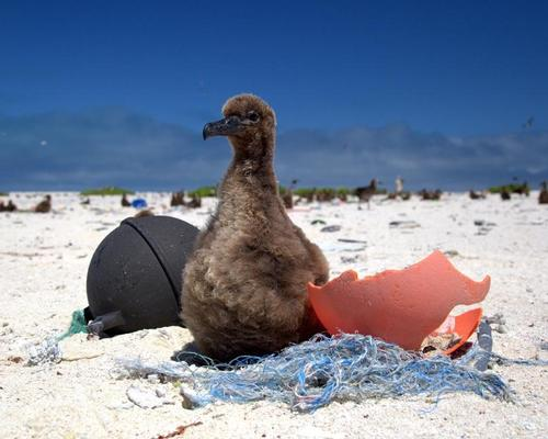 Marine pollution is a problem, with waste including plastics washing up on beaches / NOAA Marine Debris Program