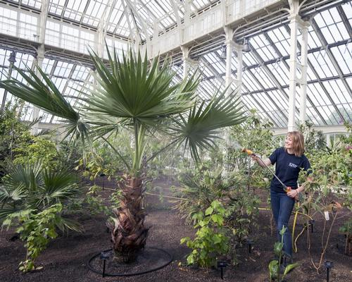 As the plants inside had outgrown the space, blocking sunlight from reaching the ground, they were removed and propagated by Kew's gardeners, with the species now reintroduced into the new space