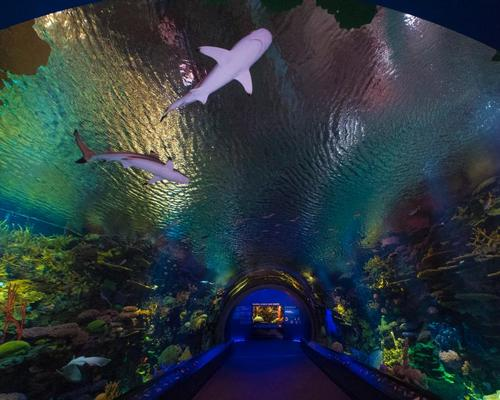 The new exhibit features more than 115 species of marine life, including 18 species of sharks and rays