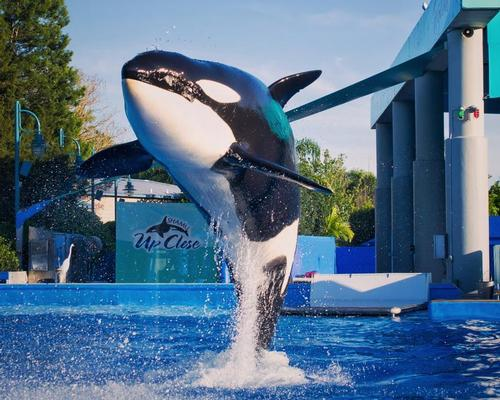 SeaWorld seems to finally be turning a financial corner