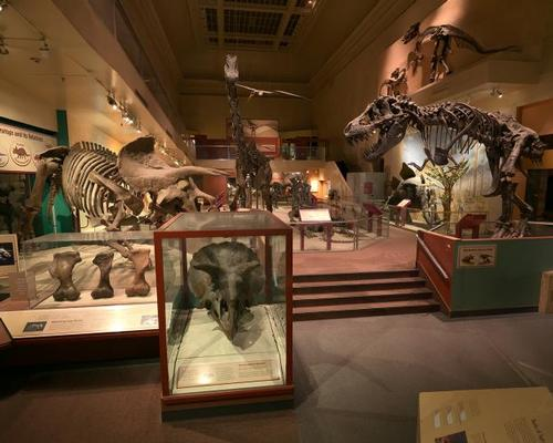 US National Museum of Natural History's Fossil Hall set for reopening