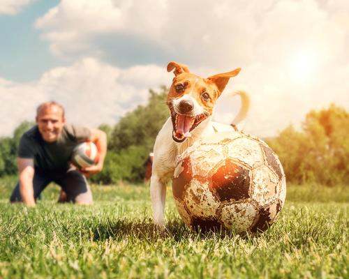 Cardiff Council has proposed to ban dogs from marked sports pitches