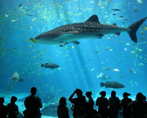 Arch Out Loud believe an aquarium will revitalise the New York borough of Queens / Zac Wolf
