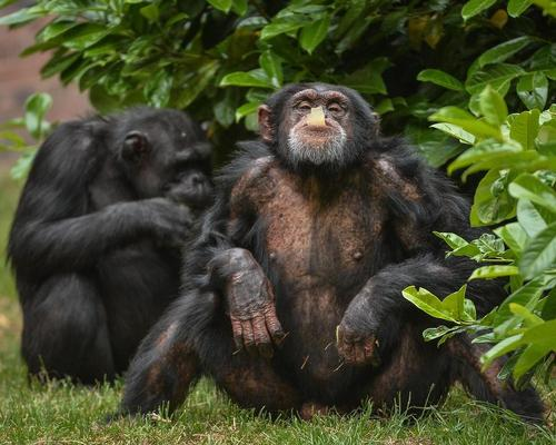 Chester Zoo reports record attendances off the back of Channel 4 documentary series