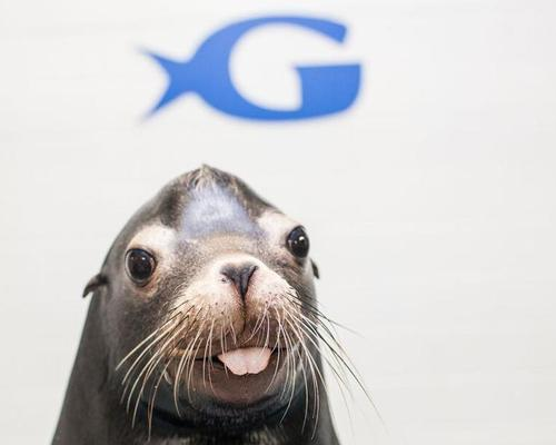 The aquarium has an active sea lion preservation programme, with a portion of earnings supporting this work / Georgia Aquarium