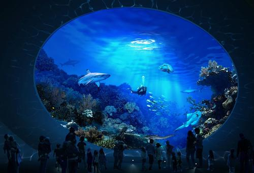 Sharks, stingrays and different species of fish will help educate visitors about human and climate-related threats in the South Pacific / LMN Architects