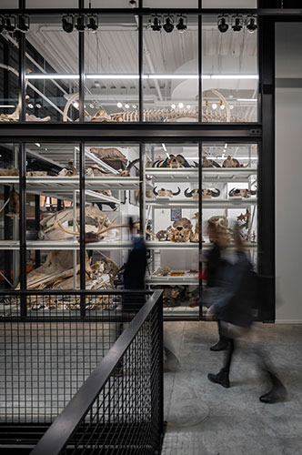 Glazing walls inside the museum provide visibility into spaces for visitors as they walk around / Olson Kundig / Aaron Leitz
