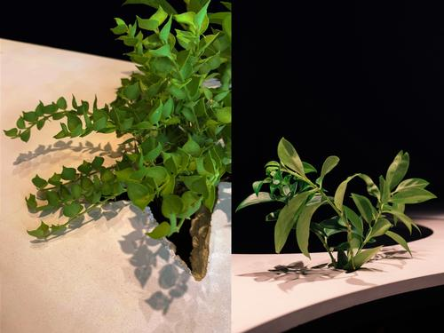 Cracks were cast in the concrete countertops for plants to grow in / Khoo Guo Jie