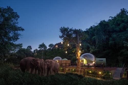 They are located at the 650,000sq m (7 million sq ft) Anantara Golden Triangle Elephant Camp & Resort in Chiang Rai, northern Thailand / Anantara Golden Triangle Elephant Camp & Resort