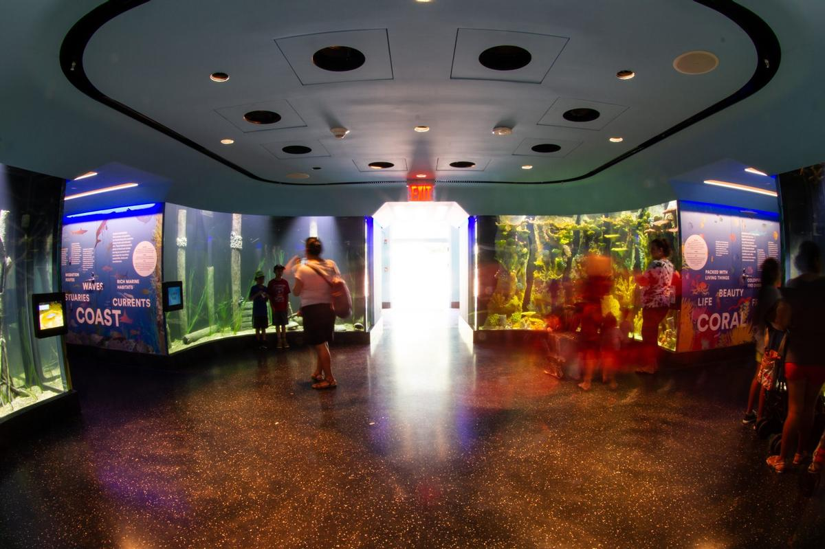 The aquarium holds sea creatures from all over the world / Duggal Visual Solutions