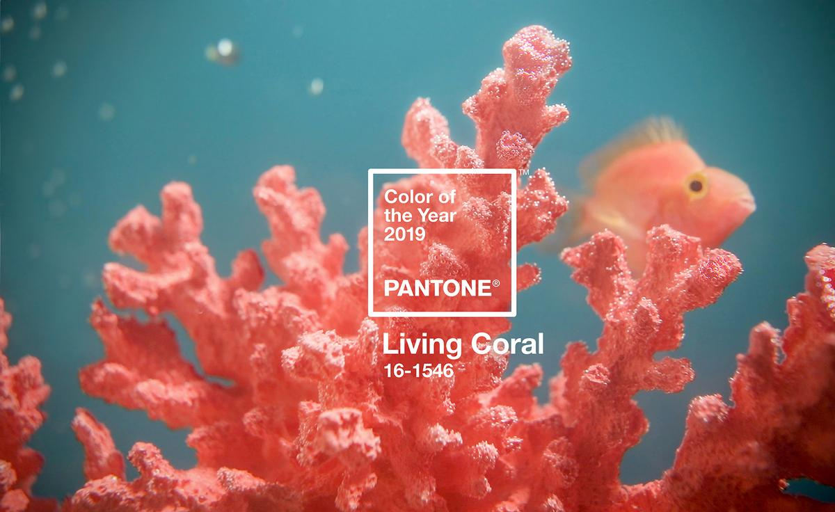 In a statement, Pantone said Living Coral 'embodies our desire for playful expression'. / Courtesy of Pantone