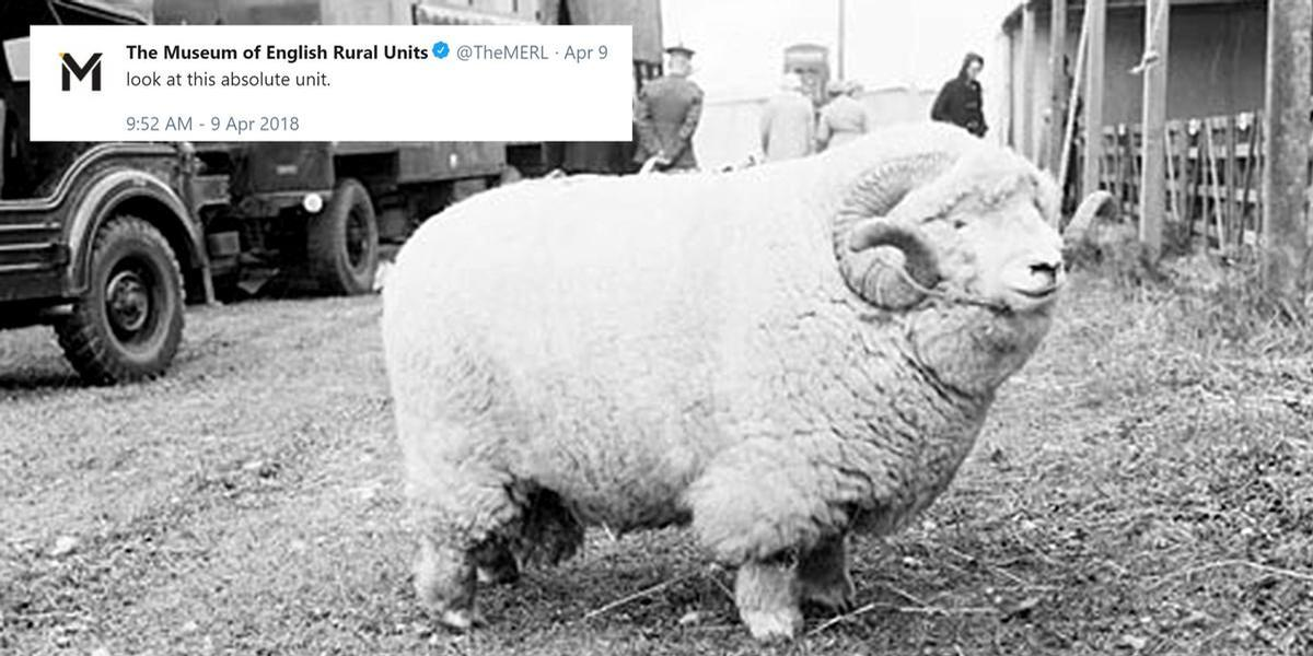 "Tweeting a picture of a rather fluffy ram, along with the caption ""look at this absolute unit"", the Museum of Rural Life found itself trending worldwide on Twitter"