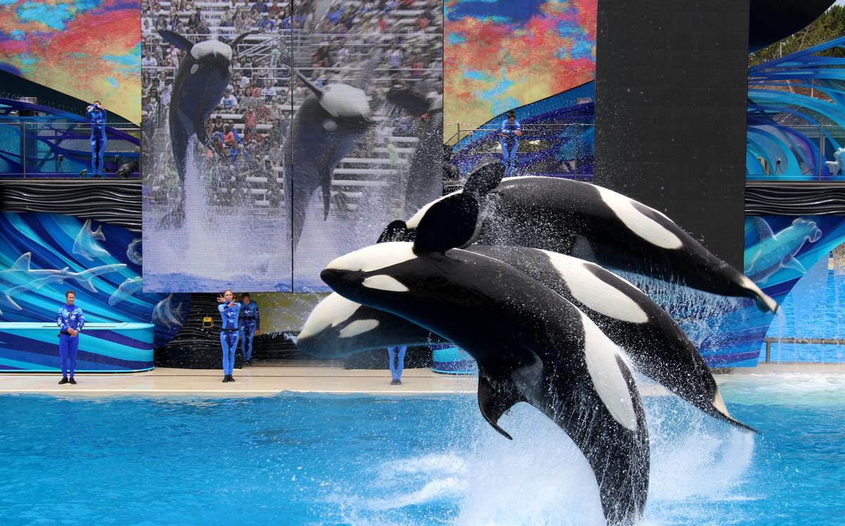 SeaWorld's treatment of orca whales remains under close scrutiny / Shutterstock